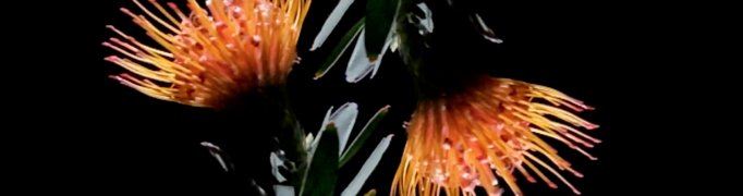 """Watch Dive Index's new """"Wish I Had A Pulse"""" (Tiny Mile Remix) video via Spill Magazine"""